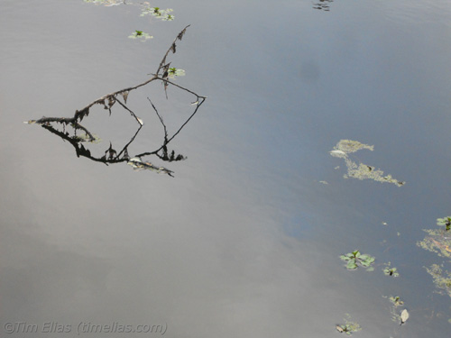 Stillness in Pond