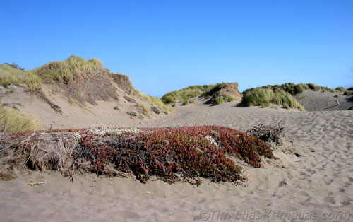 Grassy Beach by Bodega Bay