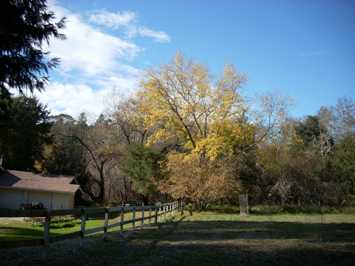 Ranch House in Autumn